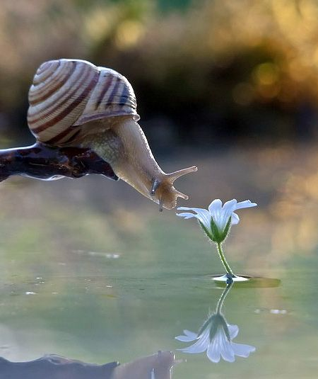 Nature appreciating nature: Photographer Vyacheslav, Macro Nature Photography, Snails Nature, Nature Photographs, Nature Macro, Art Beautiful Nature, Beautiful Flowers, Photographs Of Nature, Animal