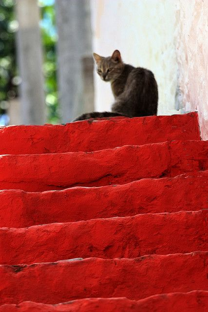 Red, #red, #red steps with #cat  Hydra island, Greece: Red Steps, Color Red, Red Red, Red Carpet, Red Cat, Red Stairs, Red Hot