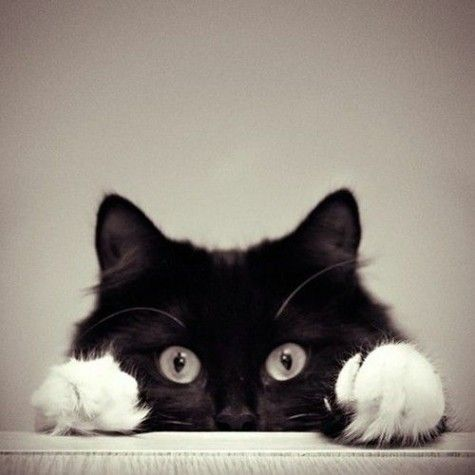 cute tuxedo kitten face <3 <3 <3: Kitty Cats, Black And White, Meow Meow, Peek A Boos, Black Cats, Kitty Kitty, White Cat, Eye