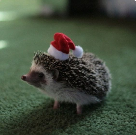 No elf ever told the little hedgehog that his hat didn't work, they just politely pretended to like getting earthworms put in all their stockings...after a few years, the little hedgehog was eaten by a wolf so it all worked out....and the earthworms w