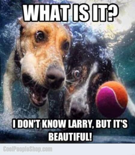 """What is it?   I don't know Larry, but it's BEAUTIFUL!! ~ Dog Shaming shame - Ball Dogs they are! @lexi coffel: Animals, Ball, Pet, Funny, Underwater Dogs, Seth Casteel, Photo, Underwaterdogs"