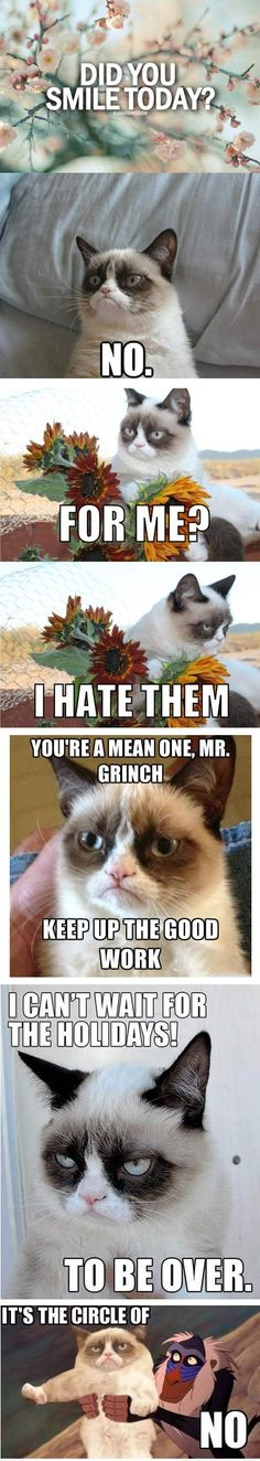 The Best Of Grumpy Cat...Click on the pic to see funnier ones!: Cat Quotes, Cat Grumpycat, Grumpycat Humor, Cat Memes Funny, Grumpy Cat Funny, Grumpy Cat I, Grumpy Cat Meme, Grumpy Cats