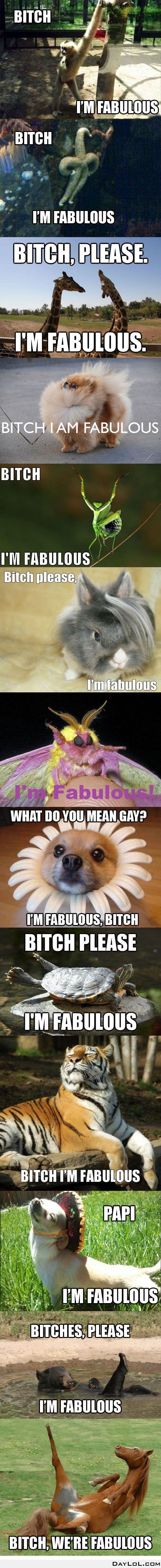 Ugghhh I love the diva in these animals. LOVE.: Bitch In, I M Fabulous, Fabulous Animals, Im Fabulous, Funny Stuff, Funny Animal, I'M Fabulous