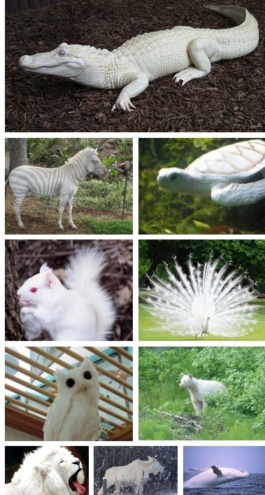 Rare albino animals: Animals Squirrel S, White Animals, Albino S, Animals Albinos, Rare Albino Animals, Amazing Animals, Rare Animals