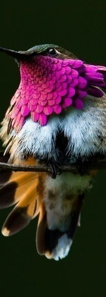 Hummingbird beauty!  ♥ ♥