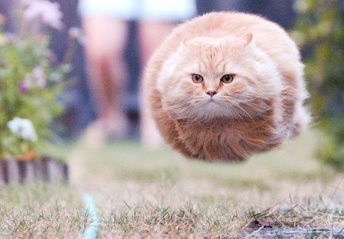 running cat, taken just at the right time so he looks like a speeding bullet. I find it hard to believe this wasn't photoshopped but it's still incredible