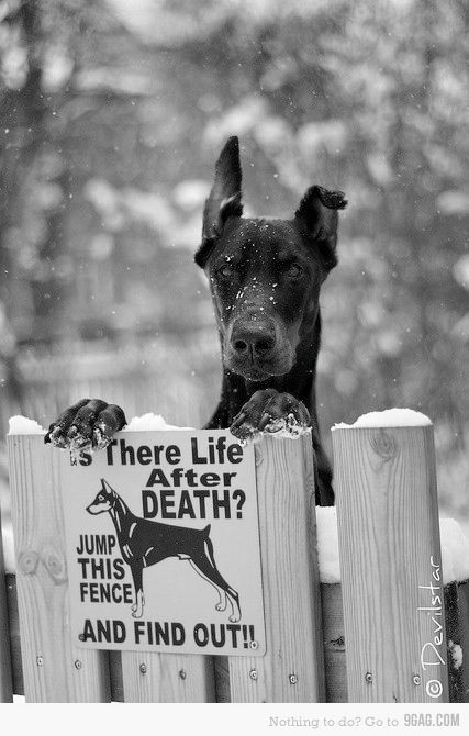 doberman.  nice Keep Out sign and even better guard dog