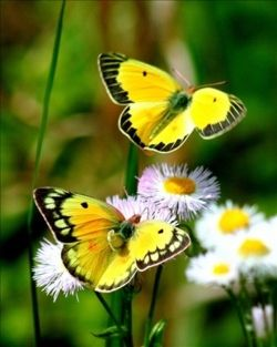 spring butterflies-Through the things of nature, and the deepest and tenderest earthly ties that human hearts can know, God has sought to reveal himself to us.
