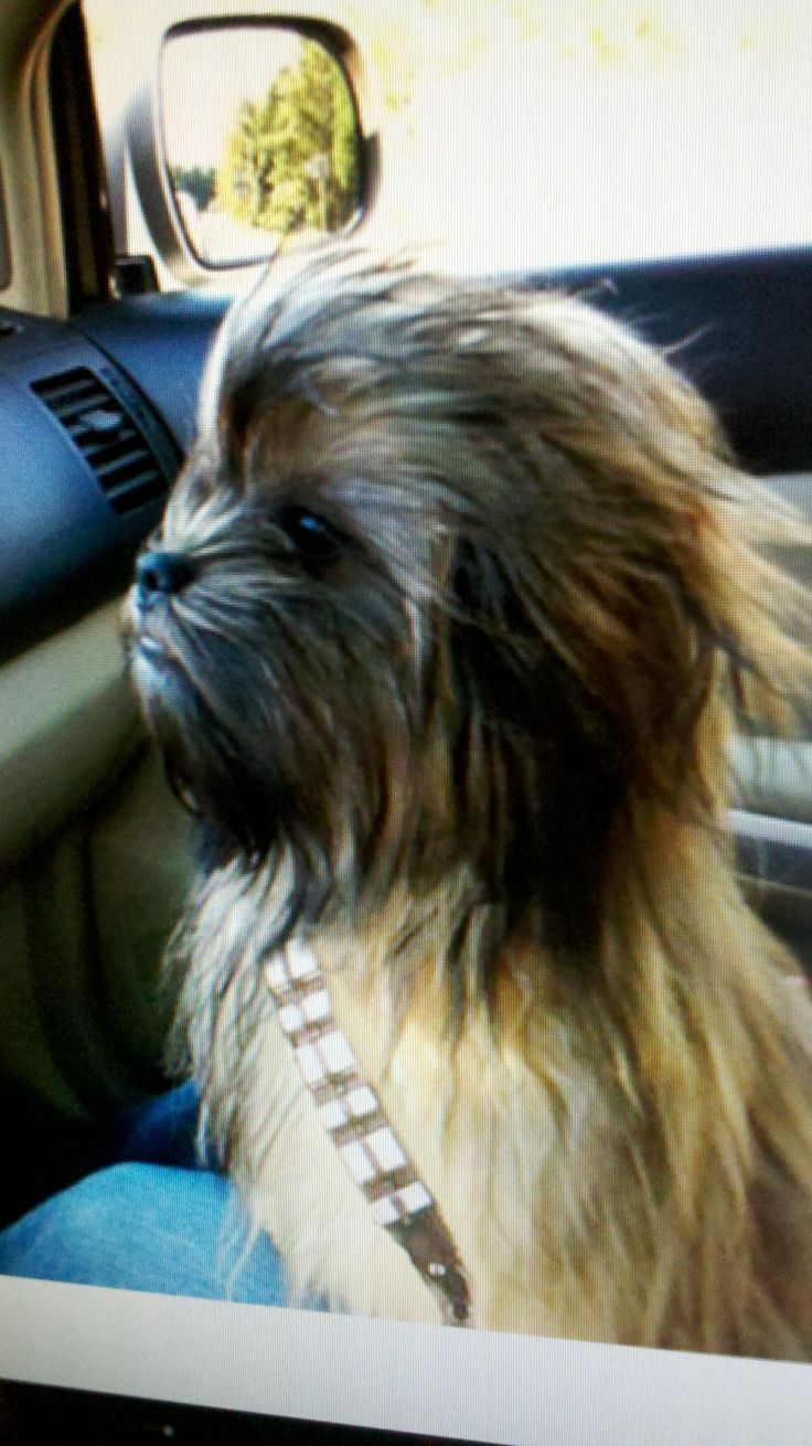 Best dog costume ever If there is a hypoallergenic dog like this I am getting it!!!: Animal Costumes, Costume Baby, Baby Dogs, Funny Dog Costumes, Starwars