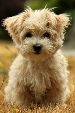 One day, I will have a dog. I have no idea what breed but it is going to happen. I am extremely jealous of people who have pets.: Animals, Cute Puppies, Dogs, Sweet, So Cute, Pets, Puppys, Box