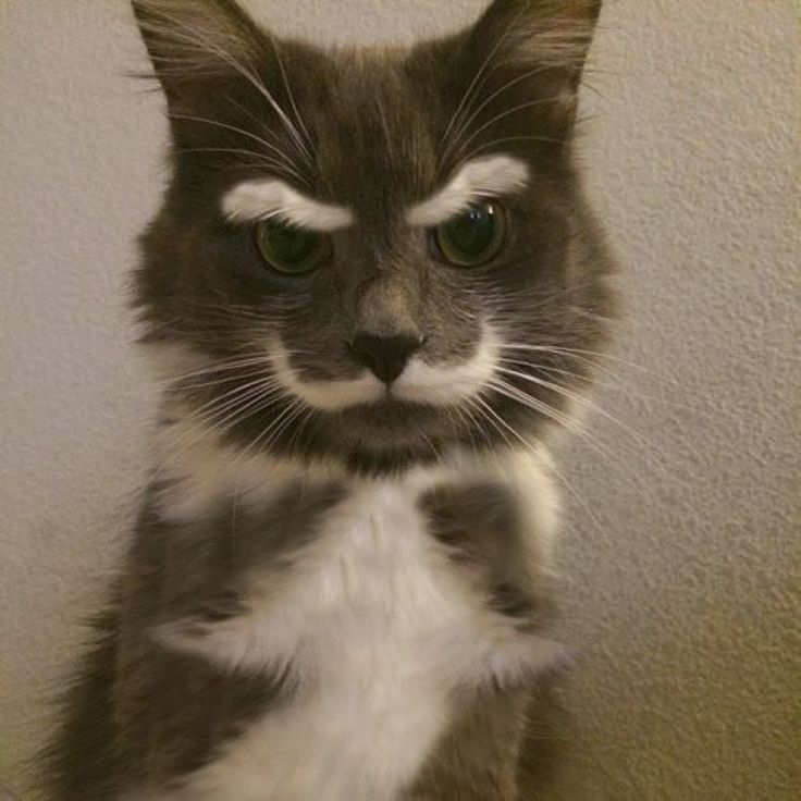 5 Pets with strange and Amazing Markings | The Planet of Pets: Cats, Animals, Stuff, Funny Cat, Pet, Crazy Cat, Funny Animal, Kitty, Mustache