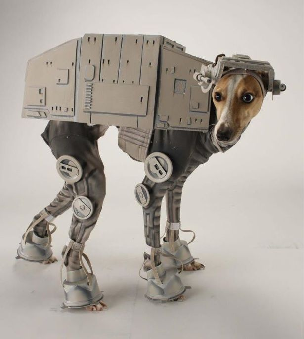 AT-AT Dog?! Here's a costume LAIKA/house artist Katie Mello (of robot pumpkin fame) made for her dog, Bones.  #StarWars: Dogs, Halloween Costumes, Pet, Stars, Star Wars, Dog Costumes, Animal, Starwars