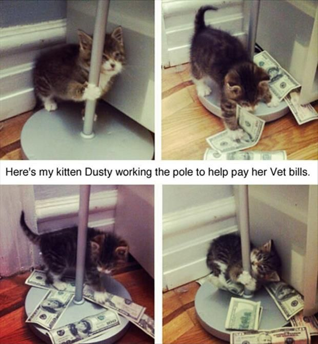 Dump A Day Funny Pictures Of The Day - 92 Pics: Not, Cats, Animals, Vet Bills, Stuff, Funny, Funnies, Kitty