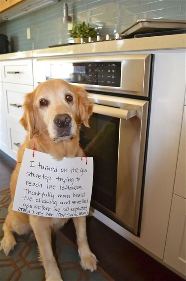 lol aww: Dog Shame, Gas Stovetop, Dog Shaming, Dogs, Bad Dog, Baby Girl, Funny Animal, Pet Shaming