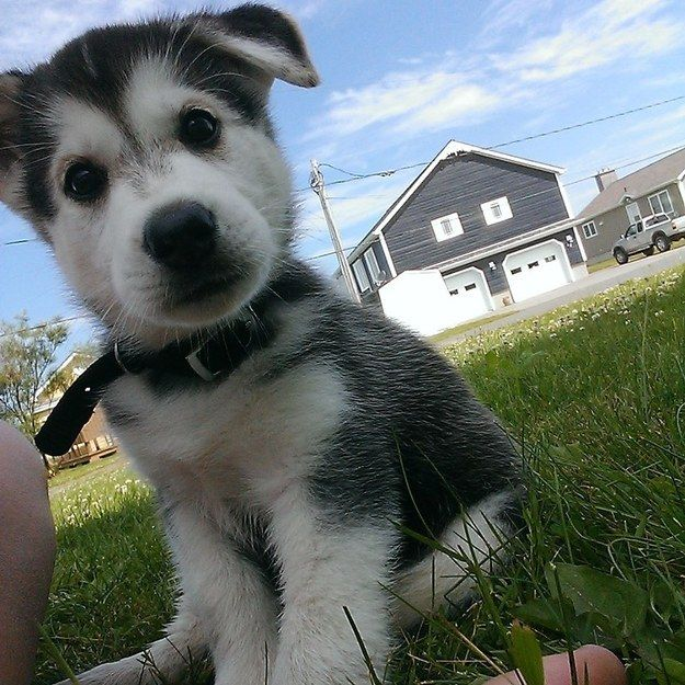 Look at this earnest puppy!: Cute Puppies, Animals, Dogs, 42 Adorable, Pet, Puppys, Box, Adorable Things