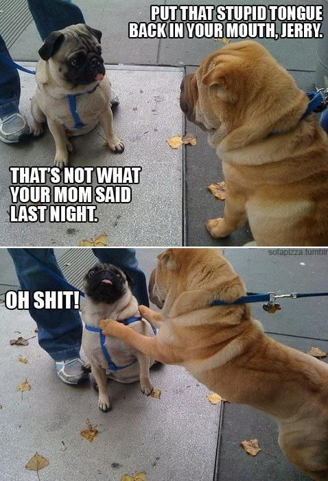 PUG humor!!  @Cortnie Hatchett Conley and @Marla Carpenter, I knew you could both appreciate this one.: Giggle, Animals, Dogs, Funny Stuff, Pugs, Humor, Funnies