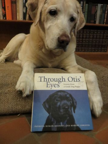Through Otis' Eyes: Picture Books, Otis Eyes