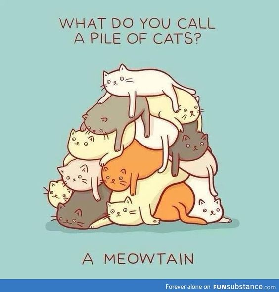 What do you call a pile of cats? A meowtain!: Cats, Meowtain, Animals, Stuff, Funny, Crazy Cat, Funnie, Cat Lady