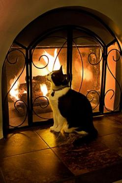 """Cats at firesides live luxuriously and are the picture of comfort."" --Leigh Hunt: Kitty Cats, Silent Night, Tuxedo Cats, Warm Fire, Cats Fireplace, Fireplace Cats, Cozy Fireplaces, Cosy Fireplaces"