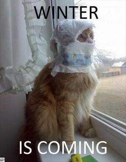 """Winter is coming"" - Kitty Cat Stark. But... this may be an illegitimate Stark so let's call him Kitty Cat Snow.: Cats, Animals, Diaper, Winter Is Coming, Funny Stuff, Humor, Things"