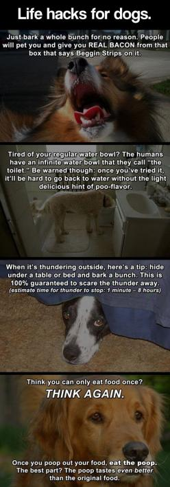 A dog's life is easy...: Delta Dogs, Stuff, Funny Dogs Hacks Tricks Life, Humor Funnypictures, Dog 8217 S Life, Lifehacks, Life Hacks, Dogs Life