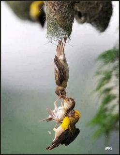 Amazing photo capture of baby bird being saved after falling from the nest.: Amazing Photo, Awesome Photo, Birdie, Animals Birds, Beautiful Birds, Photo Capture