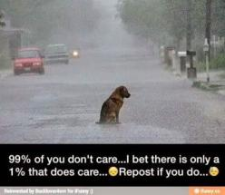 : Animals ️, Animal Cruelty, Care Me, Animal Abuse, Awww Poor, Repost If You Have A Heart, Abandoned Dog, Dogs ️, I Care