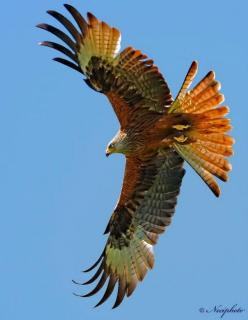 ☆ ☆ ☆: Animals, Hawks, Red Tailed Hawk, Prey, Tail Hawk, Beautiful Birds, Eagles