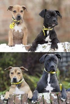 Aww :3: Animals, Best Friends, Dogs, Pet, Friends Forever, Bff, Puppy