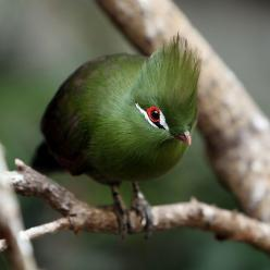 Beautiful green!: Animals, Nature, Beautiful Birds, Photo