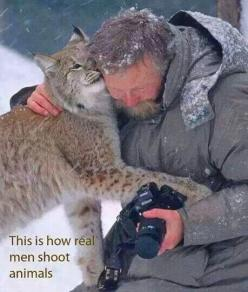 Beautiful picture! #nature #cat @Henrik Horak Gray: Picture, Shoot Animals, Big Cats, Animal Rights, Beautiful, Real Men, True, Photography