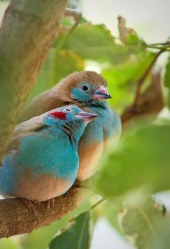 Blue Love Birds: Colorful Birds, Beautiful Colors, Birds Aw, Animals Birds, Beautiful Birds, Blue Birds, Birds 3, Birds Beautiful