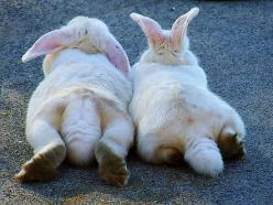 Bunny butts....too cute ;) (reminds me of my dearly departed AnnaBella. She was the same breed & white w/ gray spots. We love & miss you, girl!!! ~Cindy McMullen): Bunny Butts, Animals, Bunny Bums, Bunnies, Friend, Good Good