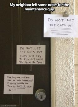 Cat lady leaves some notes..and what's wrong with  that?: Cats, Giggle, Funny, Crazy Cat, Note, Cat Lady, Animal