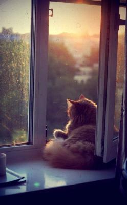 Cats like doors left open in case they change their minds. - Rosemary Nisbet: Cats, Kitten, Animals, Sunset, The View, Window Cat, Good Morning, Feline, Kitty