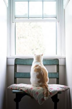 .chair with vintage pillow next to the window for the cat to daydream on...: Cats, Animals, Kitten, Windows, Window Seats, Photo, Kitty