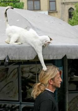 Dedicated to a particular, unnamed friend that HATES having her hair touched. Bwhahaha!: Cats, Animals, Funny Cat, Funny Stuff, Humor, Things, Smile, Kitty