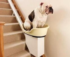 Dog Elevator For Your Home!!  Uh-Uh, no you didn't...  really?  It looks like the dog would have to jump up a flight just to get in the thing...  Not so much cool as interesting.: Dog Stairlift, Animals, Stairs, Dogs, Pets, Doggy Stairlift, Dog Elevat