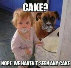 Dogs and kids are so precious and often funny! lol: Cake, Animals, Dogs, Boxer, Funny Stuff, Humor, Kid