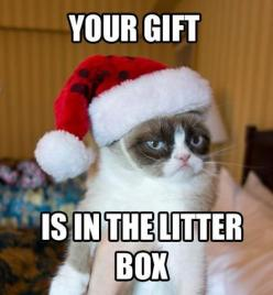 Don't lose your temper if they don't clean it ,then they go on vacation without you!: Grumpy Cat Clean, Funny Cat Quotes Humor, Grumpy Cat Funnies, Funny Quotes Grumpy Cat, Grumpy Cat Funny Quotes, Funny Grumpy Cat Quotes, Grumpy Cat Humor Funny,