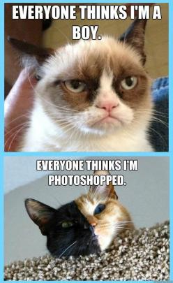 Even the cutest of us have problems :(  *: Grumpy Kitty, Grumpycat, Cat Problems, Poor Kitties, Funny, Grumpy Cat, Boy, Animal