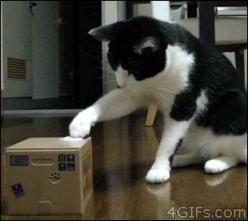 fmG0HmM - https://www.facebook.com/diplyofficial What is this Soccery?!: Cat Face, Gif S, Funny Pictures, Funny Cats, Funny Gif Cat Toy Coin Box, Animal