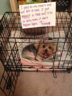 Fun Claw - Funny Cats, Funny Dogs, Funny Animals: Funny Pictures Of Dogs - 21 Pics: Doggie, Funny Animals, Dog Shaming, Funny Dogs, Yorkie, Pet, Bad Dog, Animal Shaming