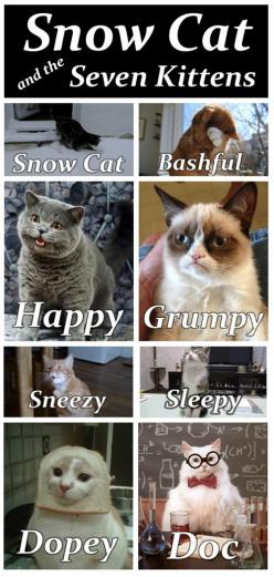 Funny Cat Memes rule! find more funny cats here http://www.funnycatsblog.com #funnycatmemes #funnycats #funnycat: Grumpycat, Funny Cat, Snow Cat, Funny Stuff, Crazy Cat, Funny Animal, Kittens, Snowcat, Grumpy Cat