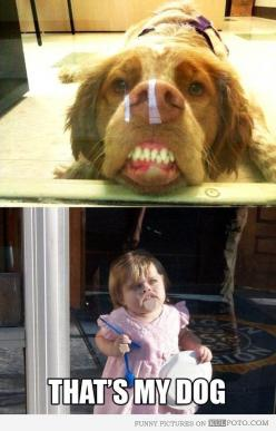 """Funny dog pressing his face against glass looking silly makes the kid who does the same say, """"That's my dog!"""": Little Girls, Funny Dogs, For Kids, Anipals Dogs, Amazing Dogs, Funny Dog Faces, Pictures Of Dogs, Funny Dog Pictures"""