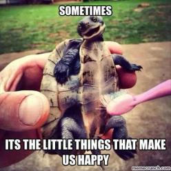 Funny Pictures Of The Day - 96 Pics: Tortoise, Animals, Stuff, Turtle Tickle, Funny, Turtles, Smile