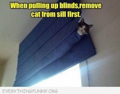 Good thing to take note of: Funny Animals, Funny Animal Pictures, Cat Humor, Funny Pictures, Funny Cats, Window Sill, Crazy Cat, Remove Cat