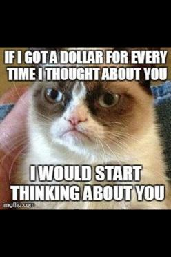 Grumpy Cat. If I got a dollar for every time I thought about you, I would start thinking about you.: Cats Humor, Grumpy Cat Humor, Grump Cat, Grumpy Kitty, Grumpy Cat How, Amen Grumpy, Grumpy Cat Funny, Funny Grumpy Cat Memes, Grumpy Cats