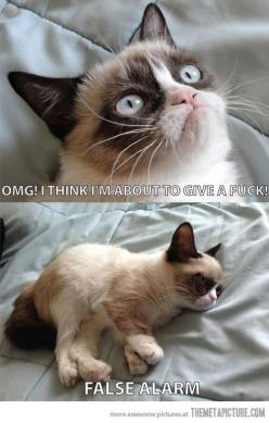 grumpy cat | Tumblr: Cats, Grumpycat, False Alarm, Funny Stuff, Things, Falsealarm, Grumpy Cat, Animal