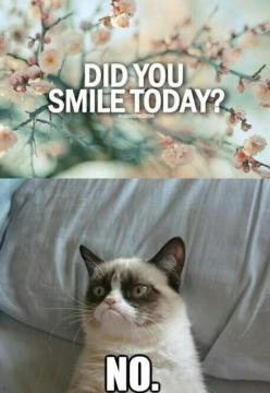 haha. I love grumpy cat. : grumpy cat quotes: Smile Today, Animals, Cat Quotes, Grumpy Kitty, Stuff, Grumpycat, Funny Quotes, Grumpy Cat